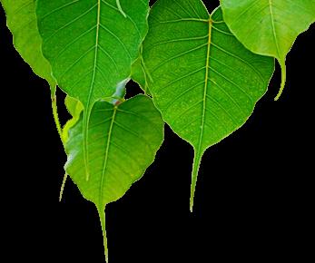 boo leaves